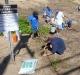dune planting Kamaole II 008re.jpg