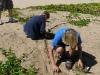 dune planting Kamaole II 015.jpg