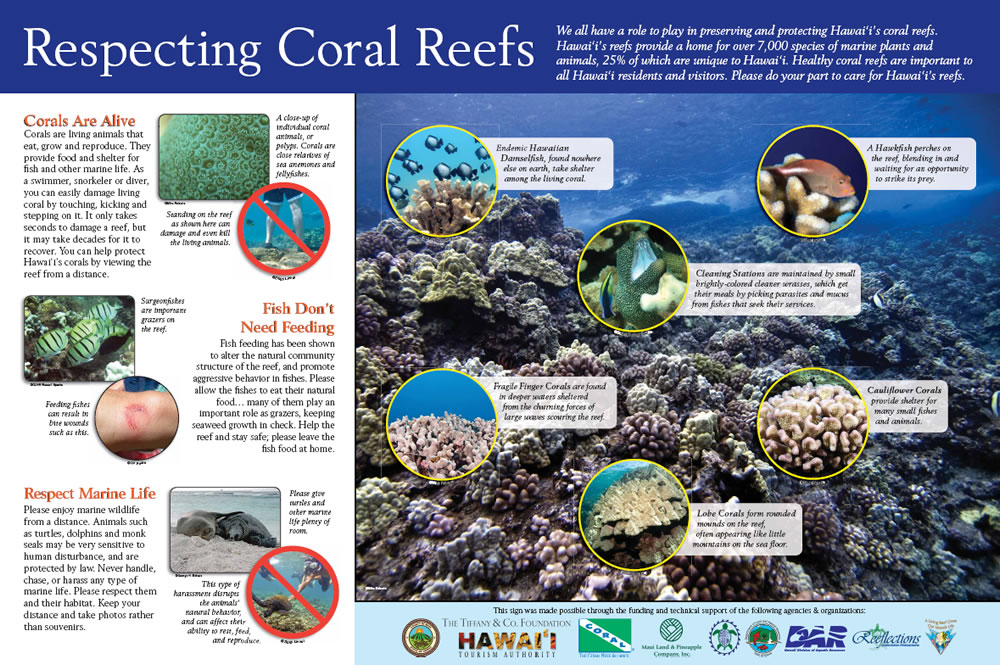 2008 International Year of the Reef