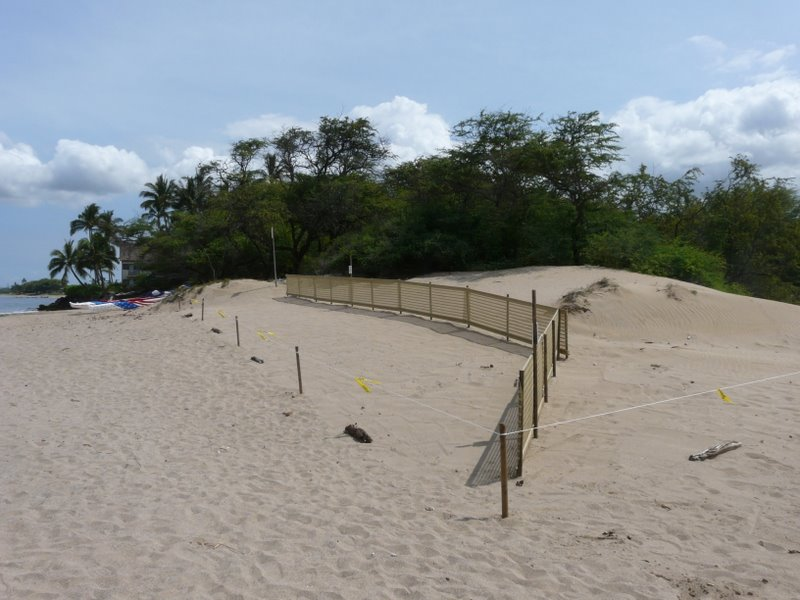 Coastal Dune Restoration Opportunities