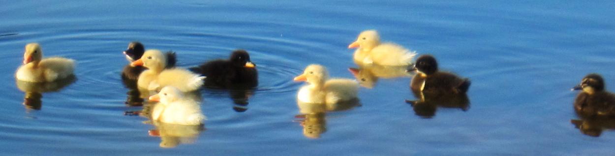 Kihei's La'ie wetlands environmental project on Saturday