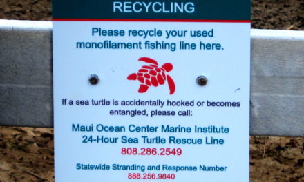 Helping to Reduce Danger for Our Endangered Ocean Creatures