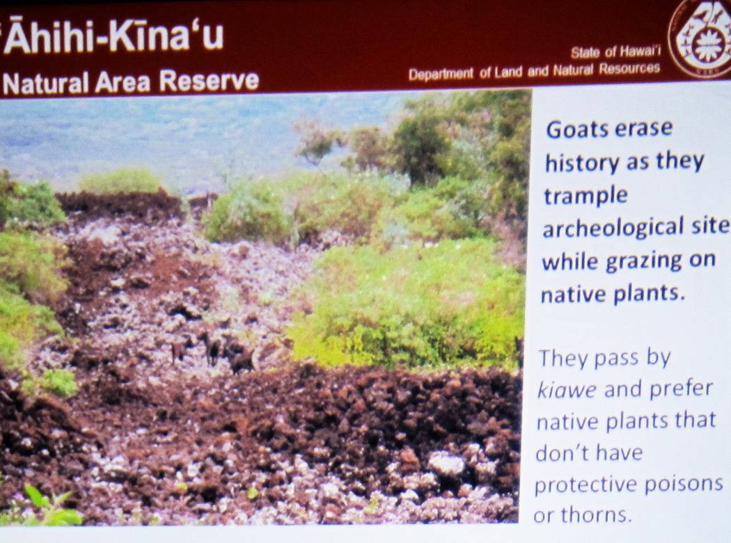 What is Happening at Ahihi Kina'u National Preserve ?