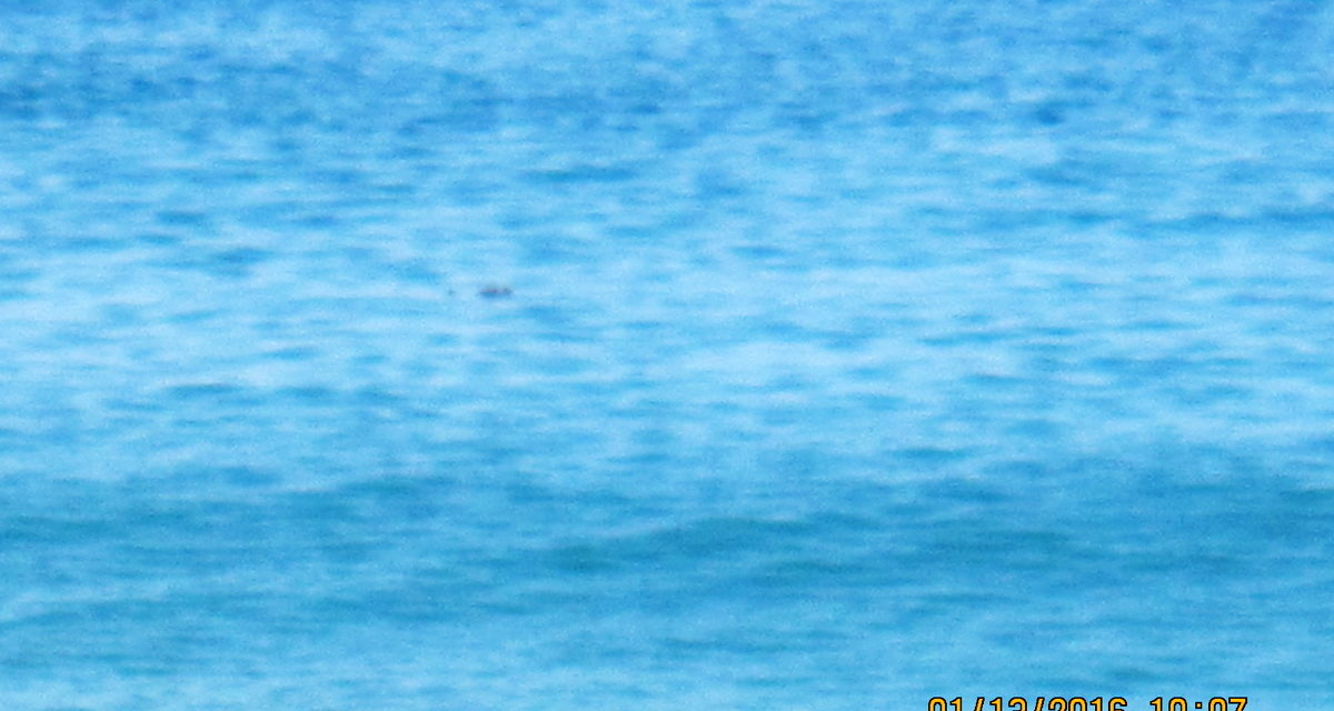 STATE  DEPARTMENT OF HEALTH OFFERS WEBSITE CONCERNING OCEAN SAFETY