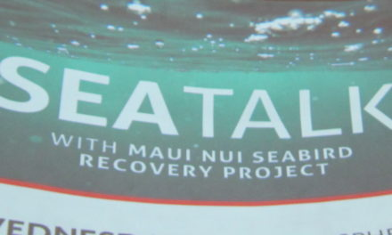All you ever wanted to know about Maui's Seabirds
