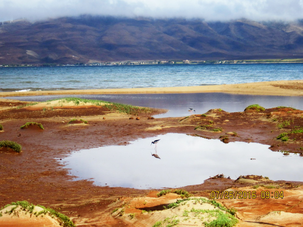 Brown Water Alert for North Kihei Area on Friday (7/15/16)