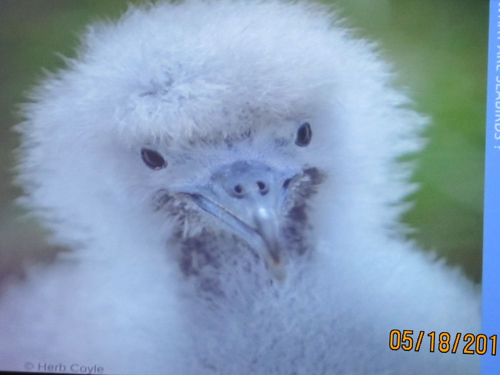 """UPDATE–""""Losing Our Dark, Losing Our Seabirds – Finding Solutions""""  Seatalk at MOC Thursday Evening"""